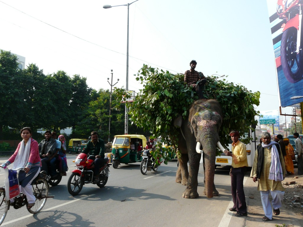 Animals on road add to the chaos